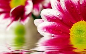 fiori acqua2